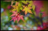 台北 奧萬大 槭紅:DSC_0031_調整大小.JPG