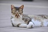 成豐夢幻世界6-12貓:_DSC0144.JPG
