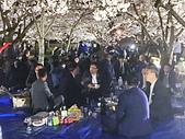 日本 平成時期的最後櫻花...2019 4月:96F8D92D-E34D-42D2-BA0E-DF3B56B2B5E2_調整大小.jpg