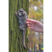 落羽杉上遇見 小鼯鼠:相簿封面