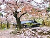 日本 平成時期的最後櫻花...2019 4月:158FF3D9-EB63-411D-A837-69B772BFF6C6_調整大小.jpg