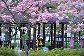 春色滿園 花旗木:DSC_0536_調整大小.JPG