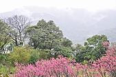 陽明山花季雨中:_DSC0255.JPG