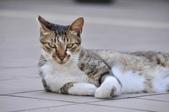 成豐夢幻世界6-12貓:_DSC0145.JPG