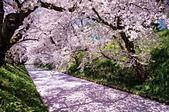 日本櫻花見:17D1D0D7-4693-0A2B-A288-9C8BA4E80617_調整大小.jpg