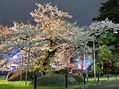 日本 平成時期的最後櫻花...2019 4月:252F9EF2-0B41-4EC5-9437-2661A09C1E3D_調整大小.jpg