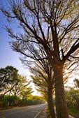 學甲欖仁樹:DSC_2270_調整大小.JPG