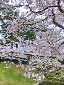 日本櫻花見:25DDDDB3-8308-4B0C-9583-2997874AB51C_調整大小.jpg