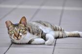成豐夢幻世界6-12貓:_DSC0148.JPG