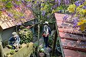 粗坑窯 紫藤:DSC_9863_調整大小.JPG