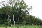 風景-松濤意境98-9-3:IMG_0267.JPG