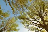 學甲欖仁樹:DSC_2308_調整大小.JPG