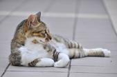 成豐夢幻世界6-12貓:_DSC0150.JPG