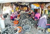 龍山漁港:平均85歲