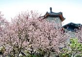 雨過東方寺2015:DSC_5666_調整大小.JPG