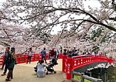 日本櫻花見:6C69900F-02DC-4392-91B8-510B06993119_調整大小.jpg