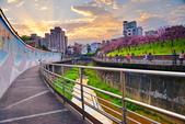內湖 櫻花 2020:DSC_0855_調整大小.JPG