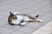 成豐夢幻世界6-12貓:_DSC0158.JPG
