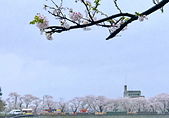 日本櫻花見:6D92CACC-6FCA-4FB4-B2A1-05F42950FF7A_調整大小.jpg