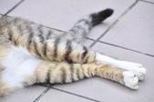 成豐夢幻世界6-12貓:_DSC0160.JPG