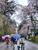 日本櫻花見:7B3C4B7E-BB78-497D-8AB0-1927B6D4D887_調整大小.jpg
