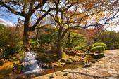 櫻你而在 陽明山公園:DSC_0487_調整大小.JPG