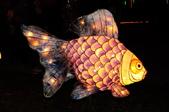 鯉魚燈:DSC_0538_調整大小.JPG