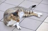 成豐夢幻世界6-12貓:_DSC0162.JPG