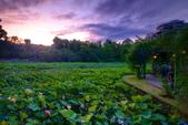 植物園夕彩:DSC_2981_調整大小.JPG