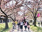 日本櫻花見:7E78B841-F237-47CC-886C-3EE378530F62_調整大小.jpg