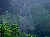 景觀-平湖露營埸98-12-13:DSC06531.JPG