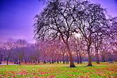 英國 白金漢宮 公園:DSC_0230_調整大小.JPG