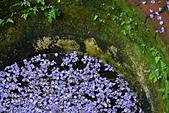 粗坑窯 紫藤:DSC_9685_調整大小.JPG