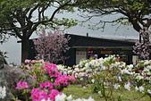 陽明山 櫻花+1:DSC_0084_調整大小.JPG