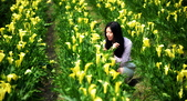 黃色 海芋田:DSC_0146_調整大小.JPG