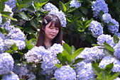 繡球花ˊ習拍:DSC_0750_調整大小.JPG