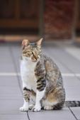 成豐夢幻世界6-12貓:旋轉對象 _DSC0127.JPG