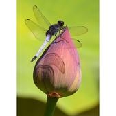 蜻蜓一夏:相簿封面