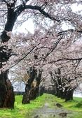 日本櫻花見:20FE3FC3-2436-4D91-A6CE-9A18D83842D0_調整大小.jpg