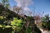 楓湖櫻花雪:DSC_0144_調整大小.JPG