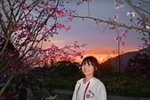 繽紛 陽明山 2019:DSC_0249_調整大小.JPG
