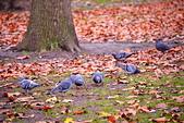 英國 白金漢宮 公園:DSC_0130_調整大小.JPG