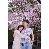 內湖碧山巖 櫻花道:相簿封面