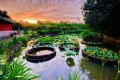 植物園夕彩:DSC_2921_調整大小.JPG
