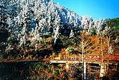 太平山11-5-98:IMG_0593.JPG