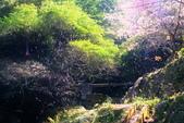 楓湖櫻花雪:DSC_9518_調整大小.JPG