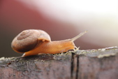 小蝸牛的早晨:DSC_6224_調整大小.JPG