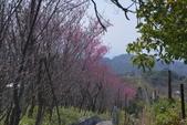十八份水川步道: