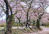 日本櫻花見:29F43D41-9D3C-4F54-AC22-C5D7E2847B79_調整大小.jpg