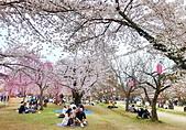 日本 平成時期的最後櫻花...2019 4月:147D65F0-192D-4359-BADD-CB6ECC76AF11_調整大小.jpg